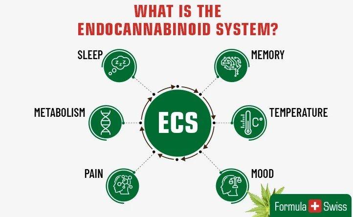 what is ecs