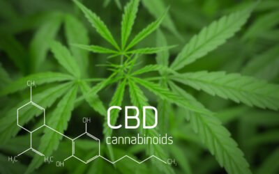 How CBD oil affects our Endocannabinoid System?